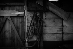 The Shed-7